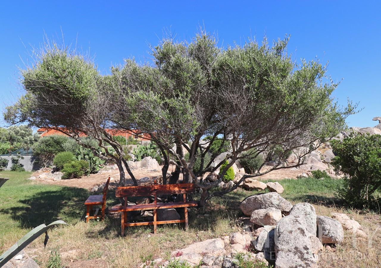 la-maddalena-vendita-immobiliare-murphy-villaggio-piras-giardino